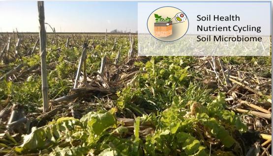 Soil Health Nutriend Cycling