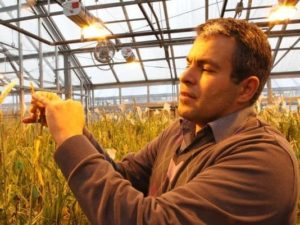 Mohsen Mohammadi is showing the spike of wheat to a news person.