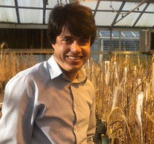 Khoshal Saber standing in wheat crossing greenhouse