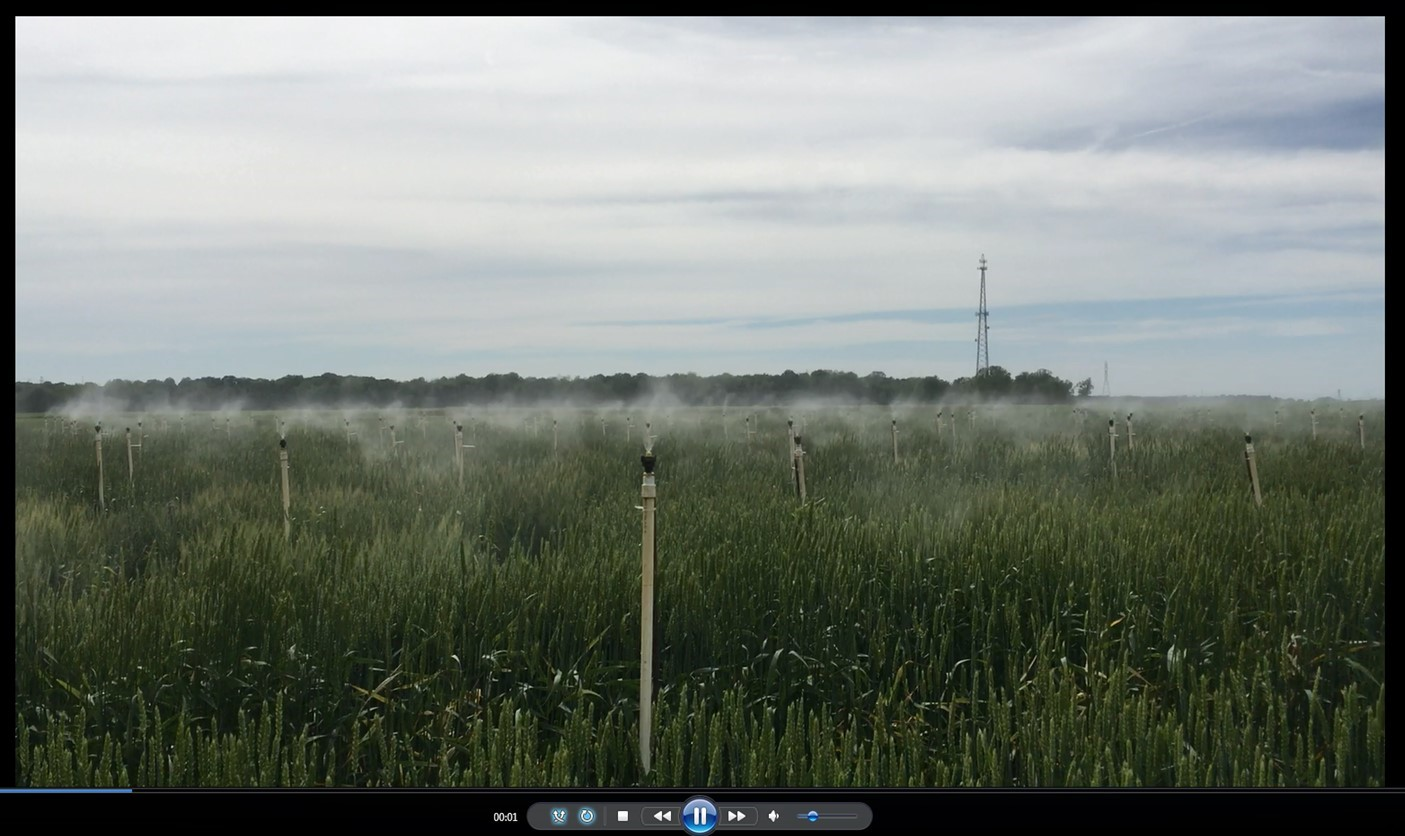 Misting system to make a humid environment, promoting establishing of Fusarium head blight disease causing pathoge