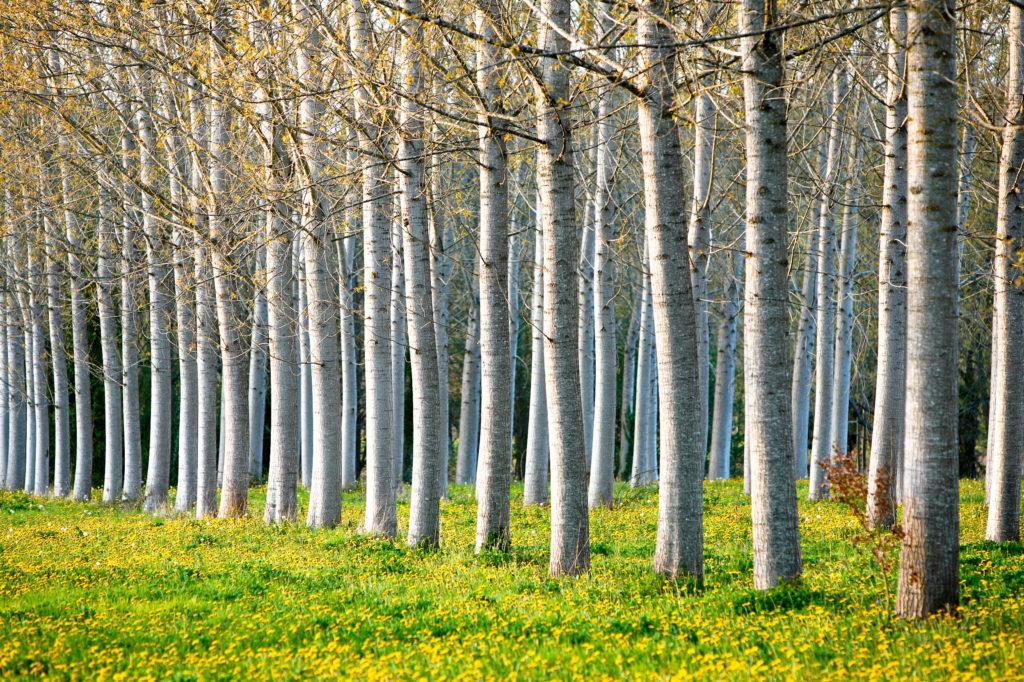climate change affect tree ecosystems