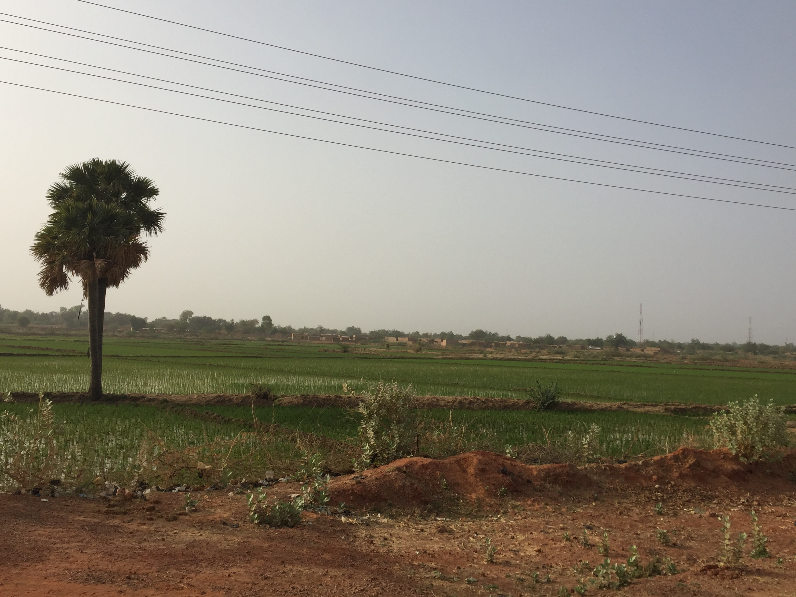 This rice field near the Niger river represents less than 1% of irrigated cropland.