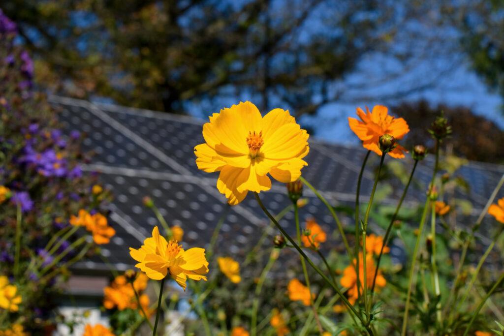 flowers planted under solar panel