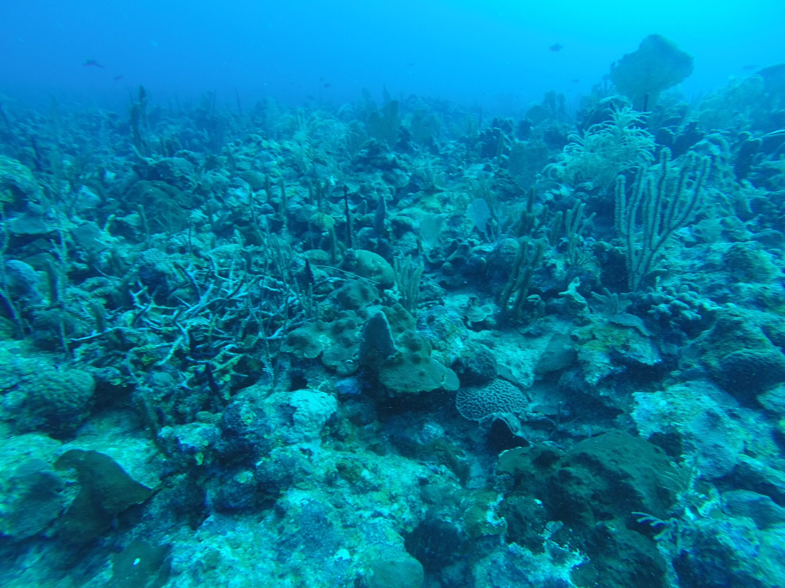 Soundscapes coral reef