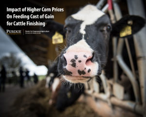 Impact of Higher Corn Prices On Feeding Cost of Gain for Cattle Finishing
