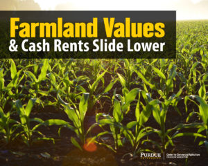 Farmland Values and Cash Rents Slide Lower