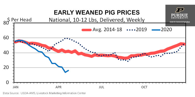Early Weaned Pig Prices, National, 10-12 lbs, Delivered, Weekly