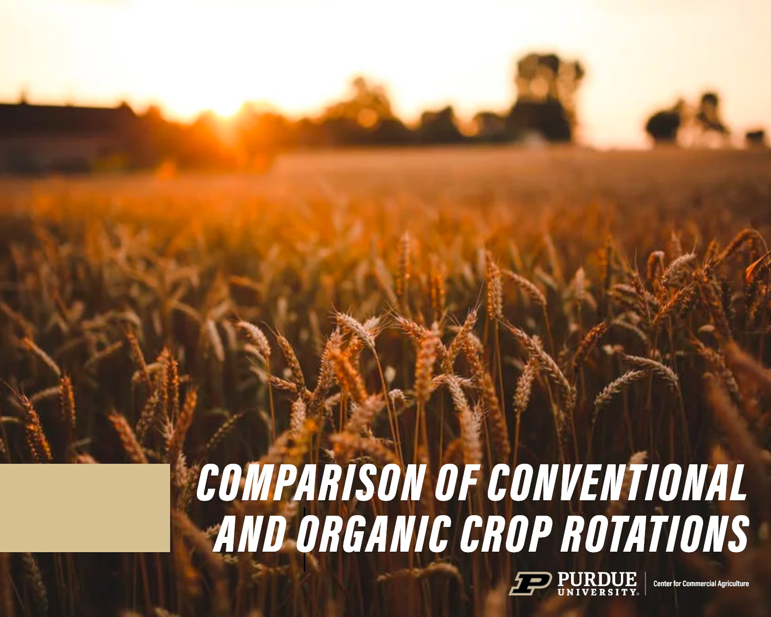 202006_LangemeierFang_ComparisonofConventionalandOrganicCropRotations_Featured