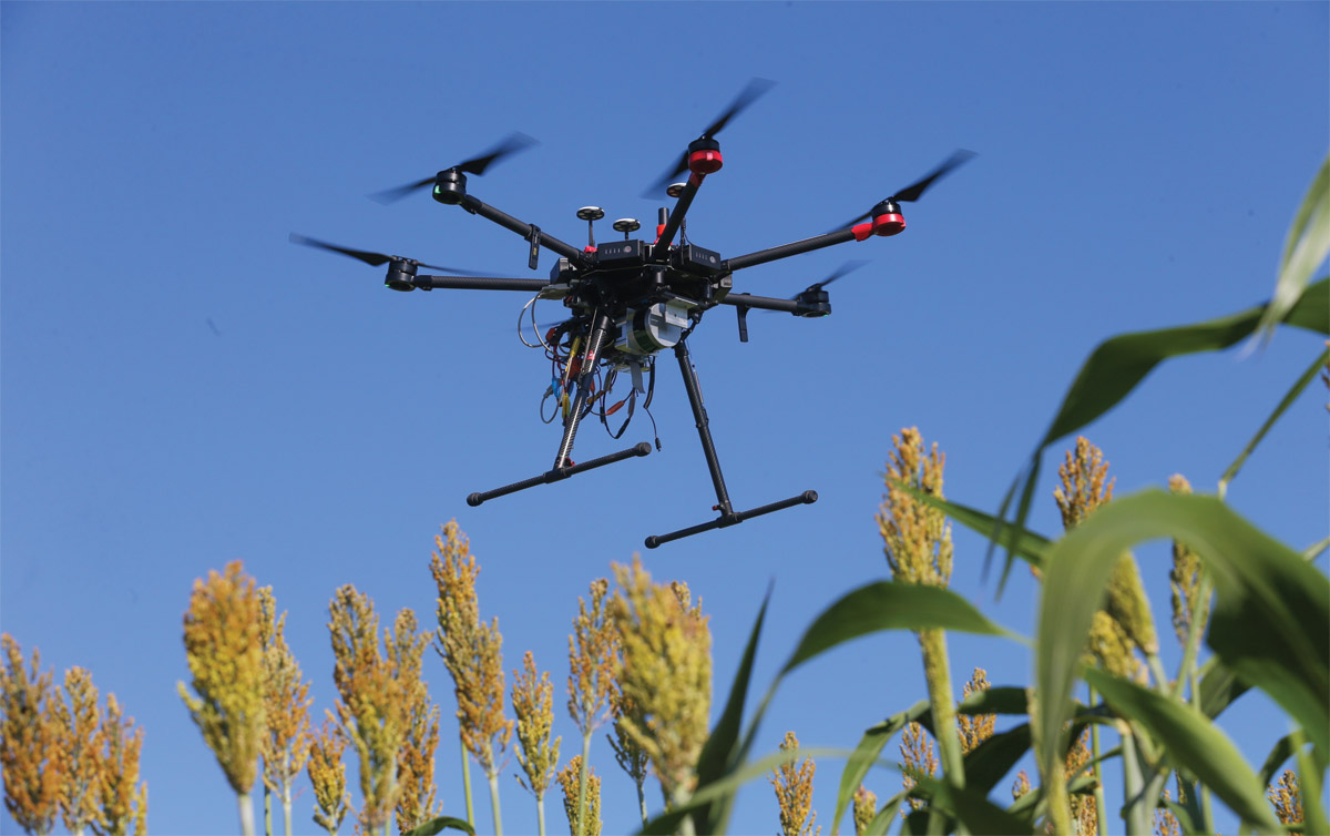 A drone captures images of a sorghum field at the Agronomy Center for Research and Education.