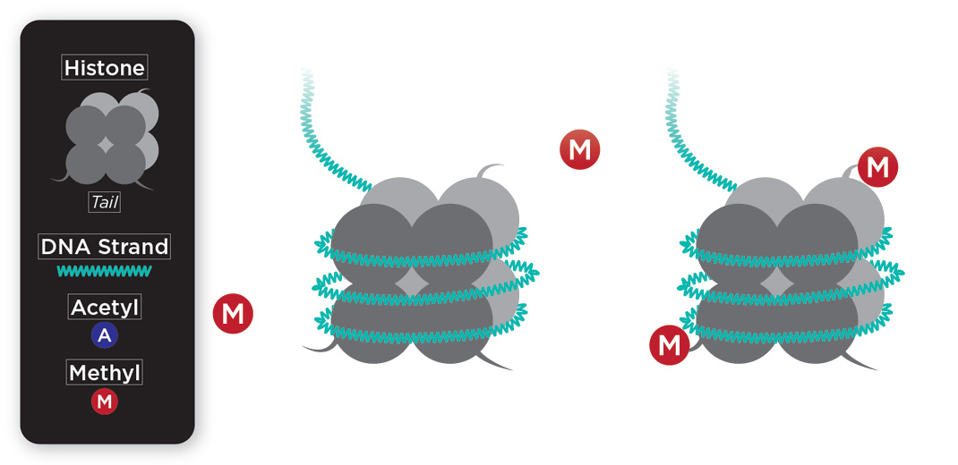 illustration of DNA methylation