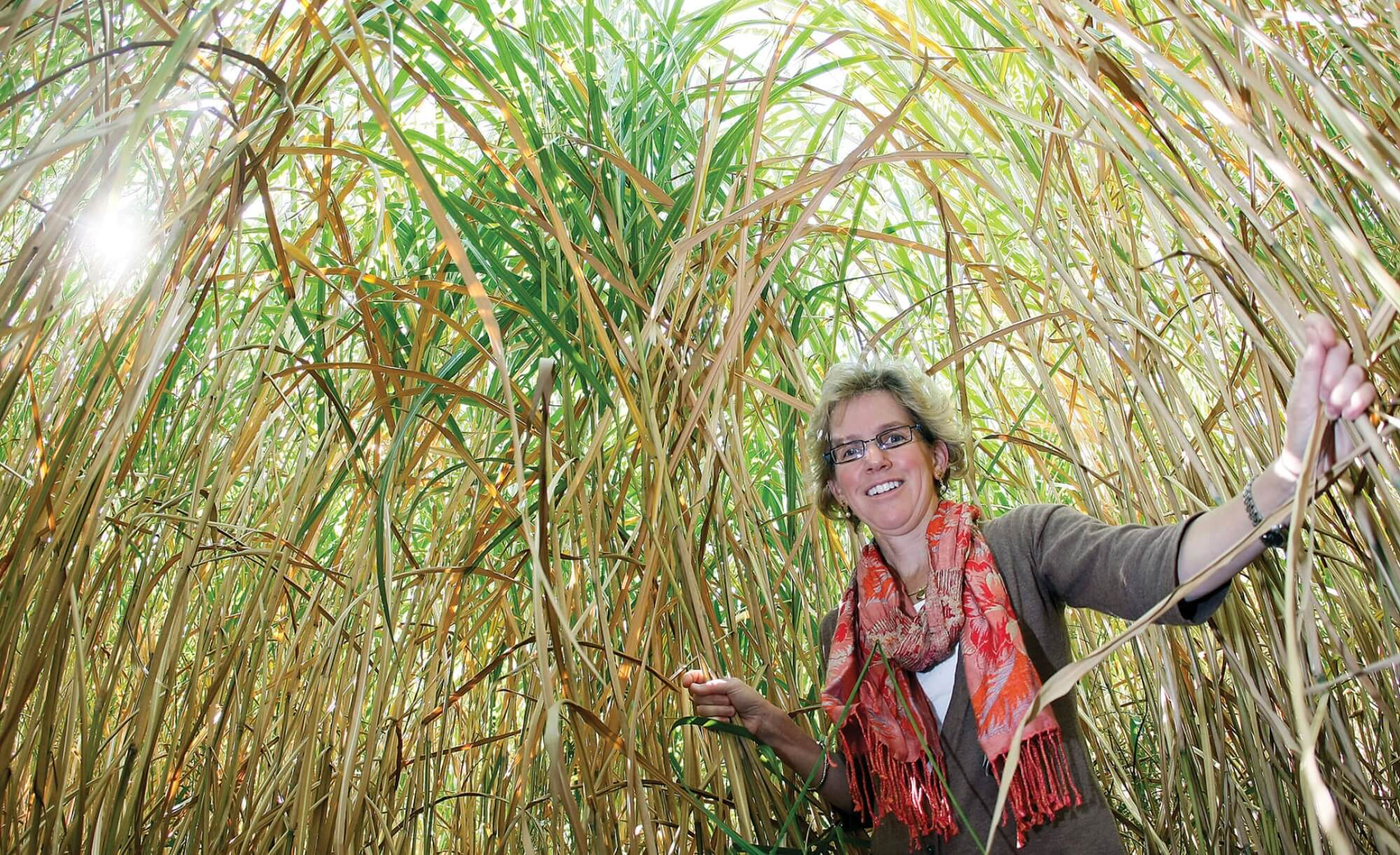 Sylvie Brouder in a stand of giant Miscanthus grass, used in biofuel production.