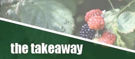 takeaway_science