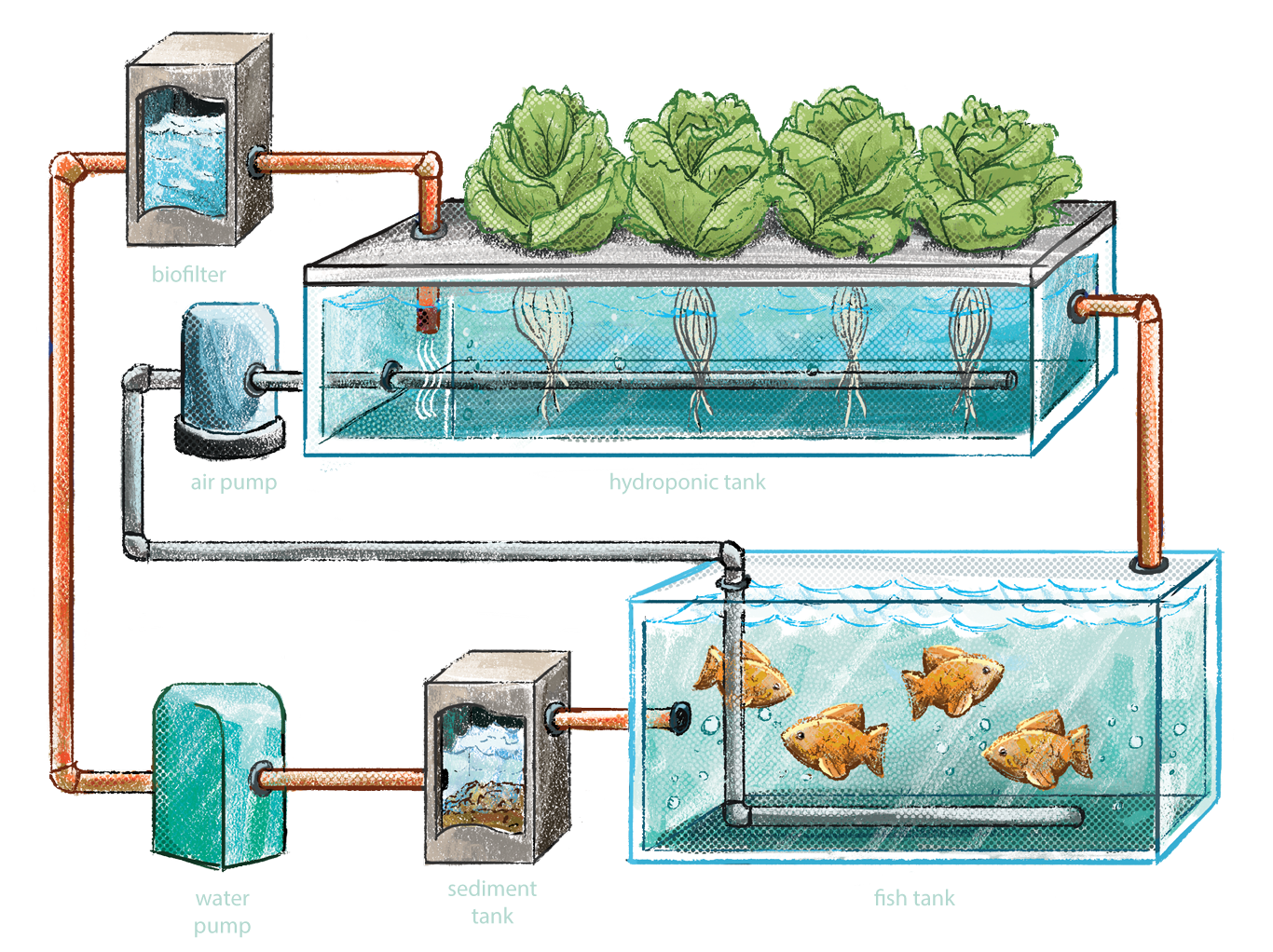Closed aquaponics system