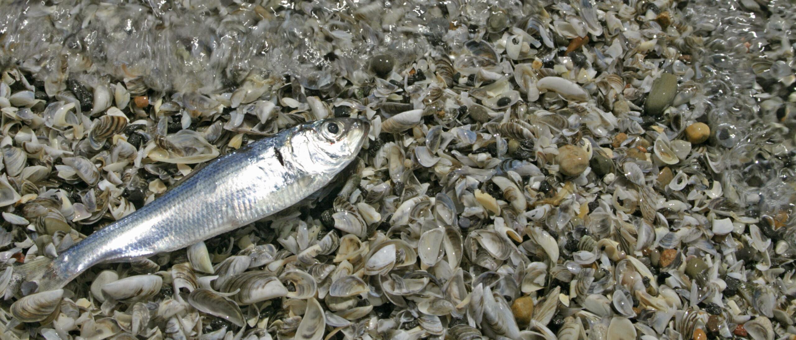 fish on beach