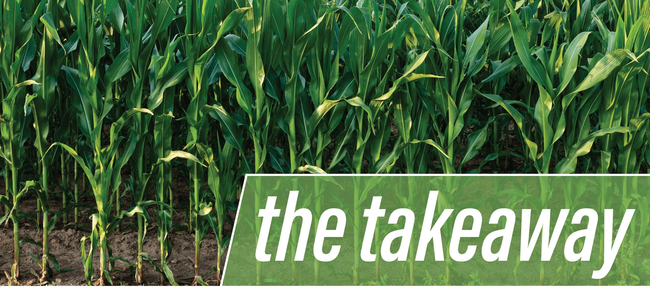 the takeaway farm