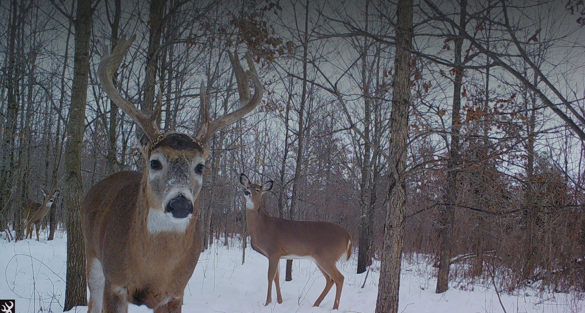 Deer in the snow header