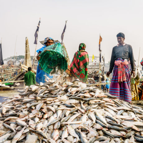 Image for Enhancing food safety in fish and chicken value chains of Bangladesh