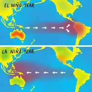 Diagram of the differences in currents and sea surface temperatures during El Nino and La Nina conditions