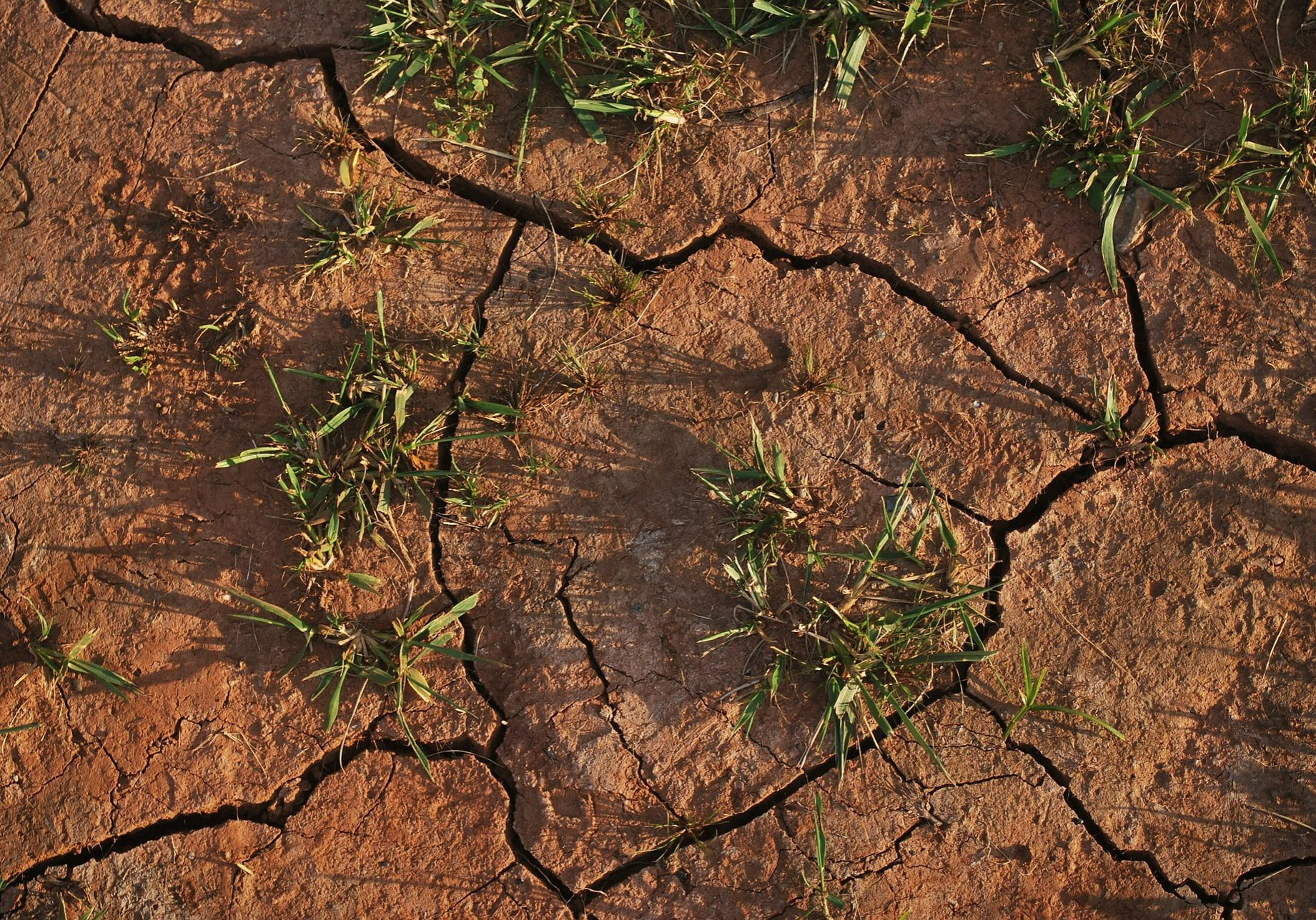 Dry cracked soil