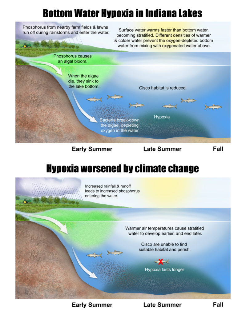 hypoxia in indiana lakes and changes caused by climate