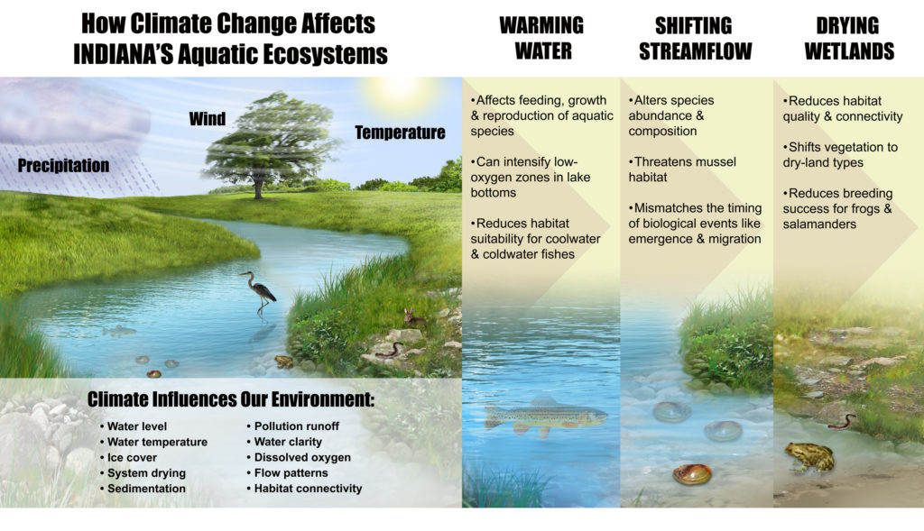An illustration of a few of the key ways in which climate change will affect Indiana's aquatic ecosystems.