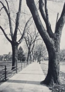 The Fence on State Street circa 1935