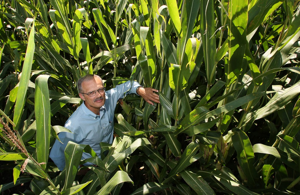 man in corn
