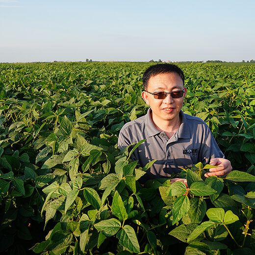 Jianxin Ma examines soybeans at Purdue's Agronomy Center for Research and Education. (Purdue University Agricultural Communications photo)