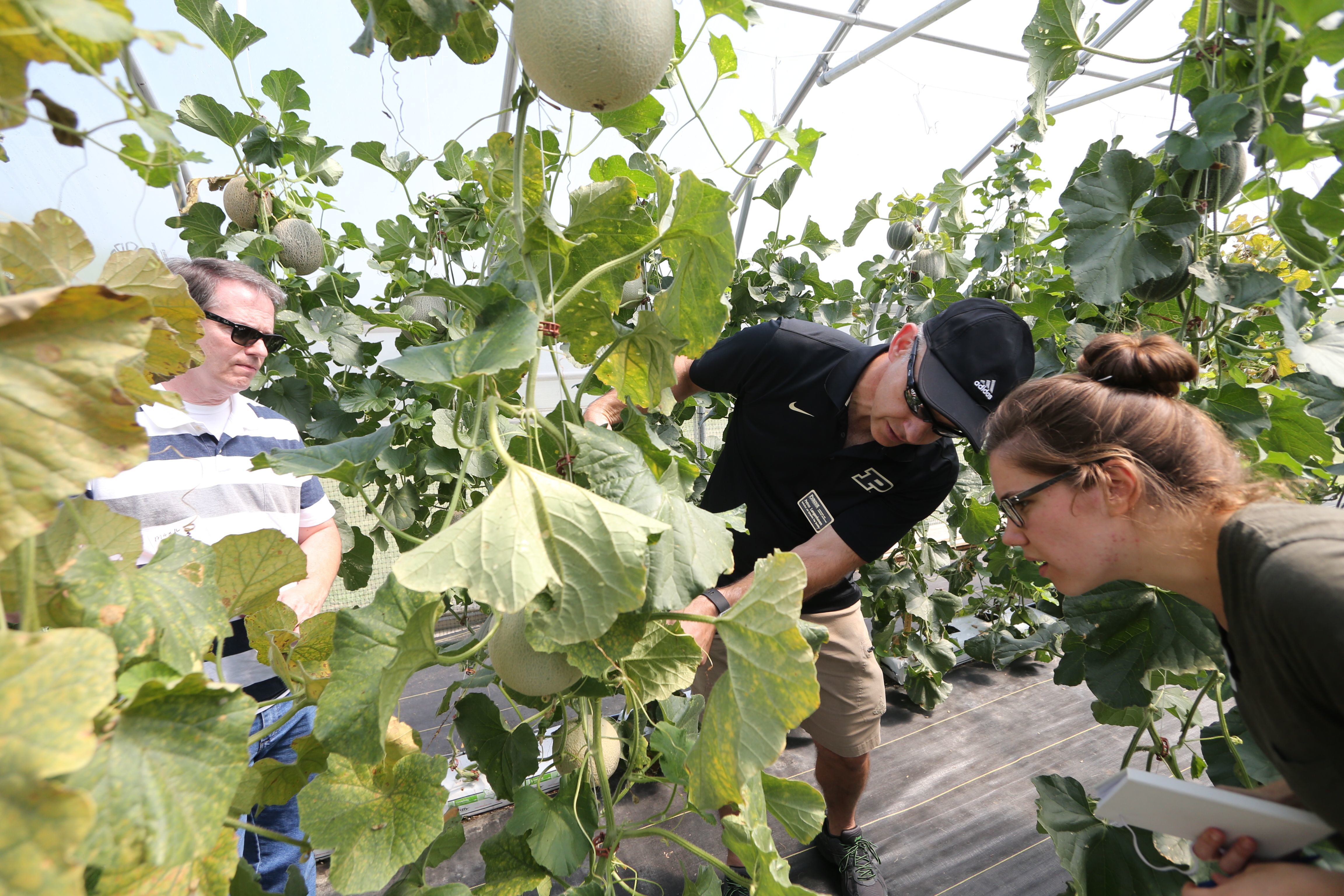 New Purdue Extension program helps grain farmers transition to organic production