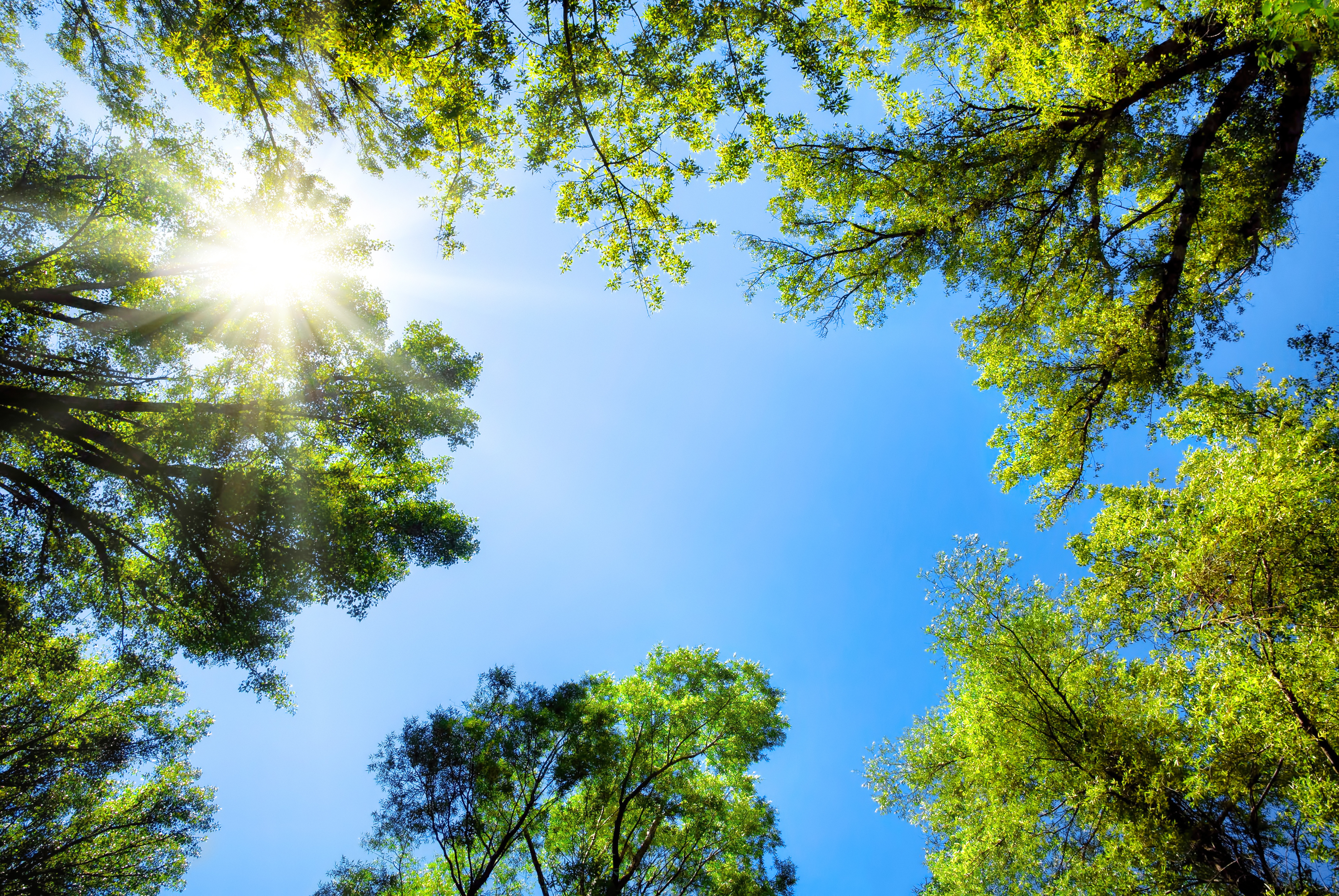 Climate change impacts reports: Warmer, wetter weather will alter Indiana's forests, urban greenspaces