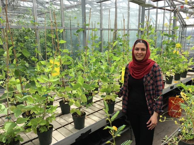 Evolutionary tree on root foraging precision wins postdoc symposium prize