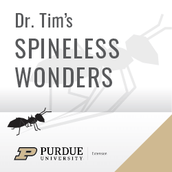 Spineless Wonders Podcast Logo with Purdue 2020 Brand