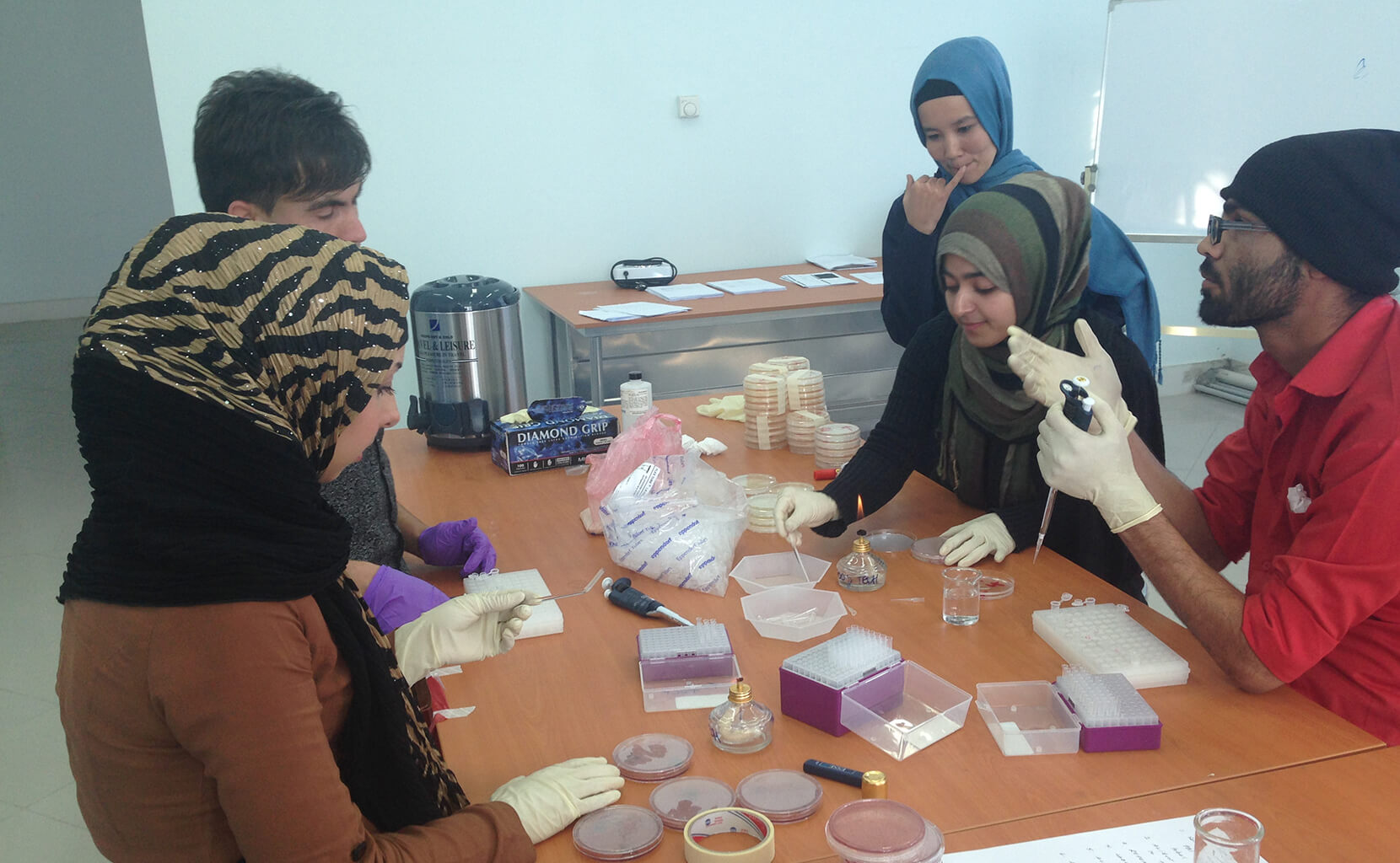 Herat University students in the food technology program plate milk to identify bacteria present in the samples.
