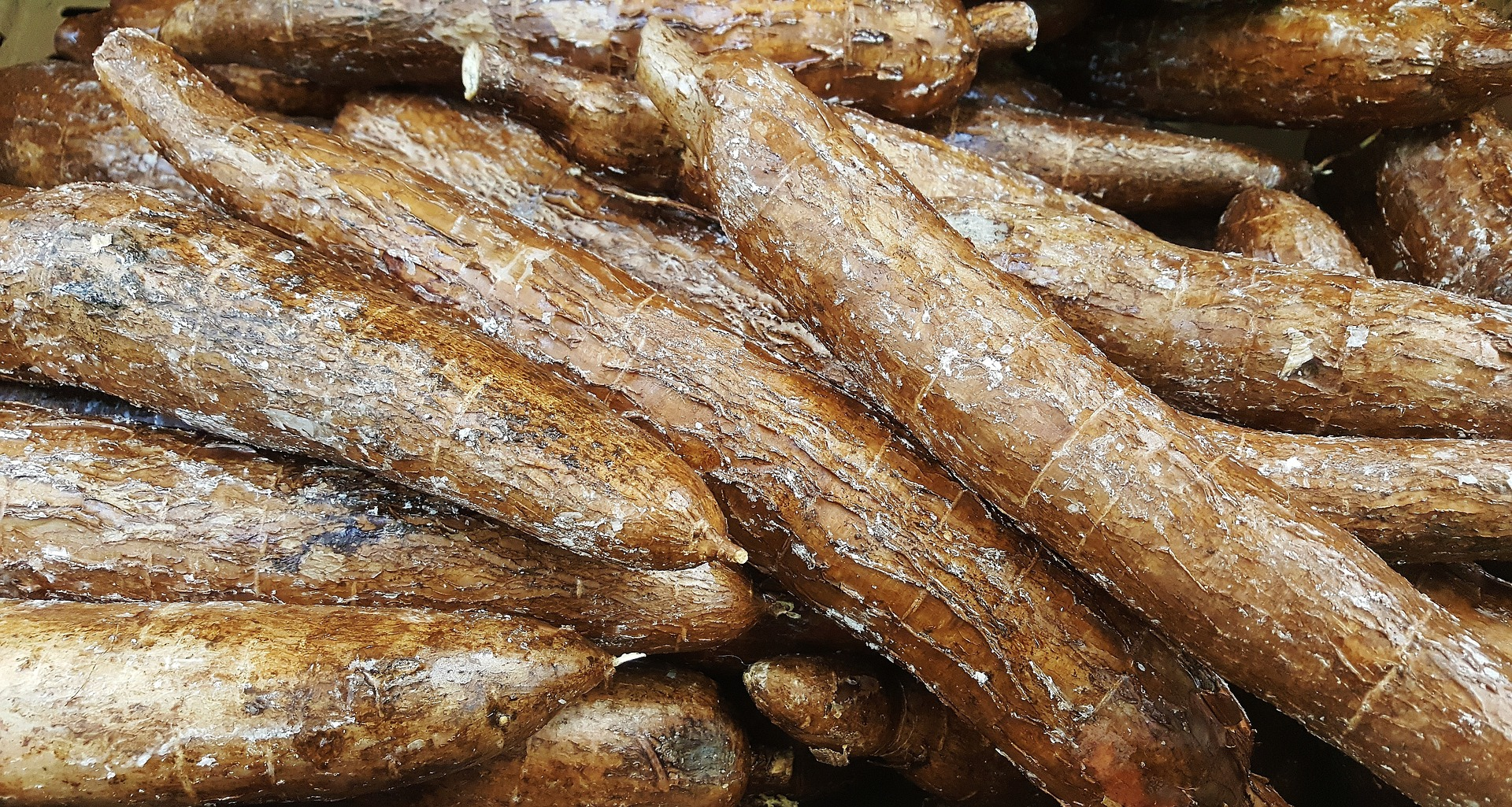 Cassava is a tuber vegetable grown widely in Africa. It is a common source of carbohydrates in Africa.