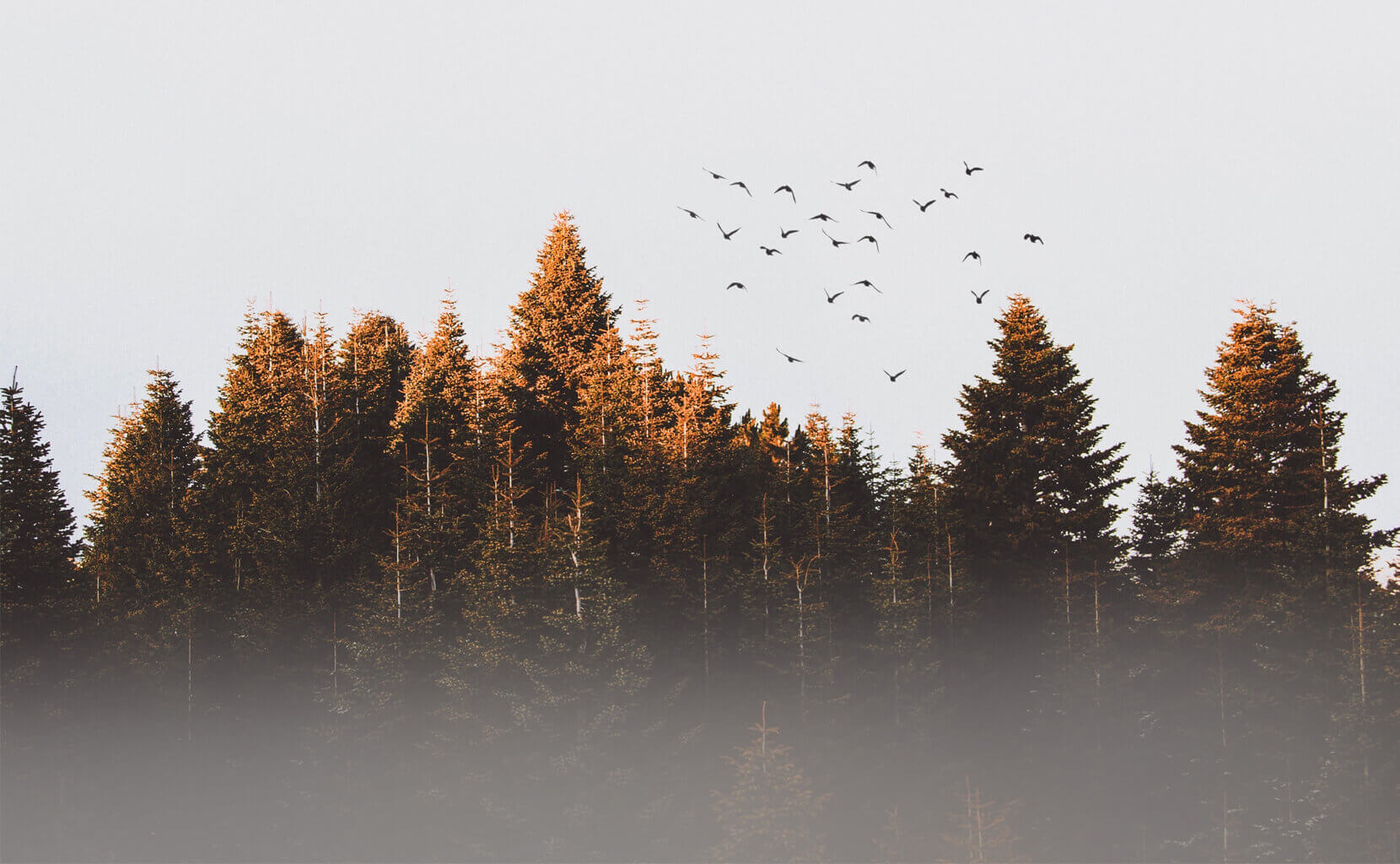 Birds above the treetops