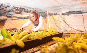 Reham Mohamed with hydroponic lettuce and lights