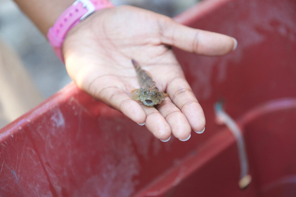 Natural Resources and Environmental Sciences at Martell Woods, creature in hand