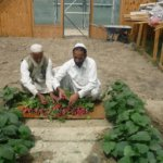 Two local farmers with radishes