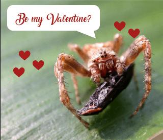 Spider valentine