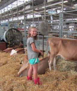 Girl in barn with calves
