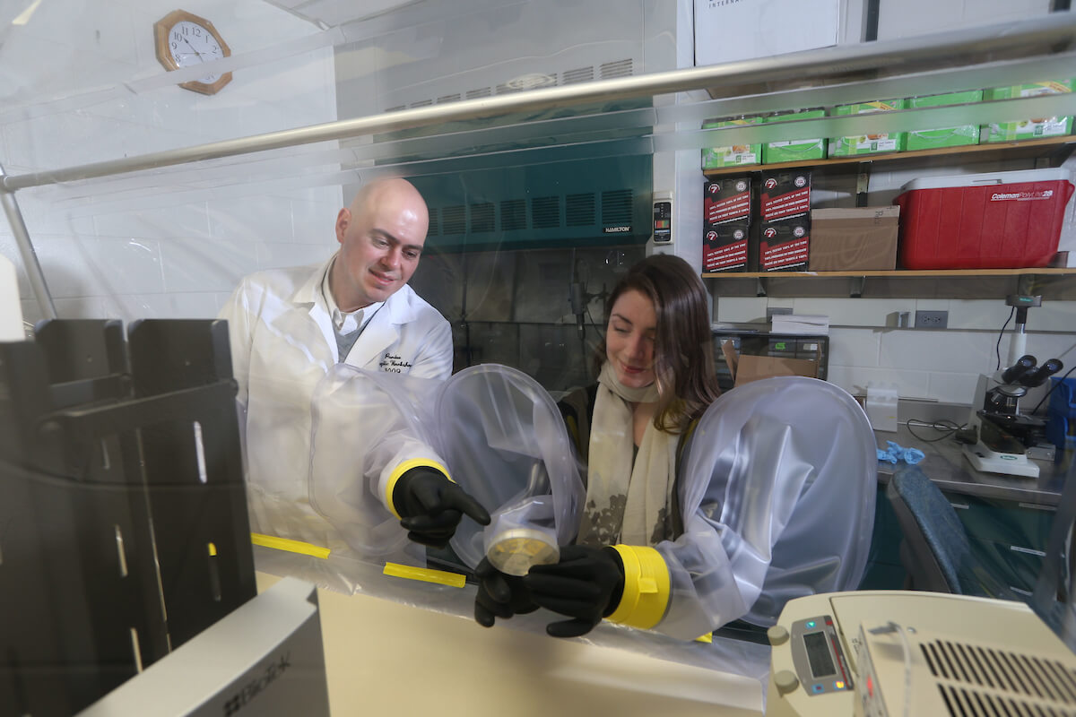 Steven Lindemann looking at a bacteria plate in an anaerobic chamber