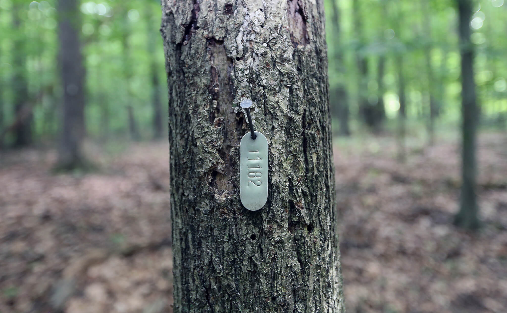 Marked tree in the woods