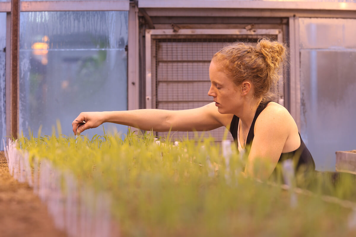 Gruss examining plants in the greenhouse