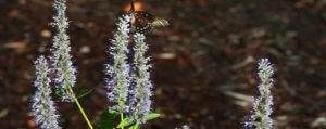 Butterfly on plants