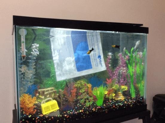 Jennifer Weller's fish