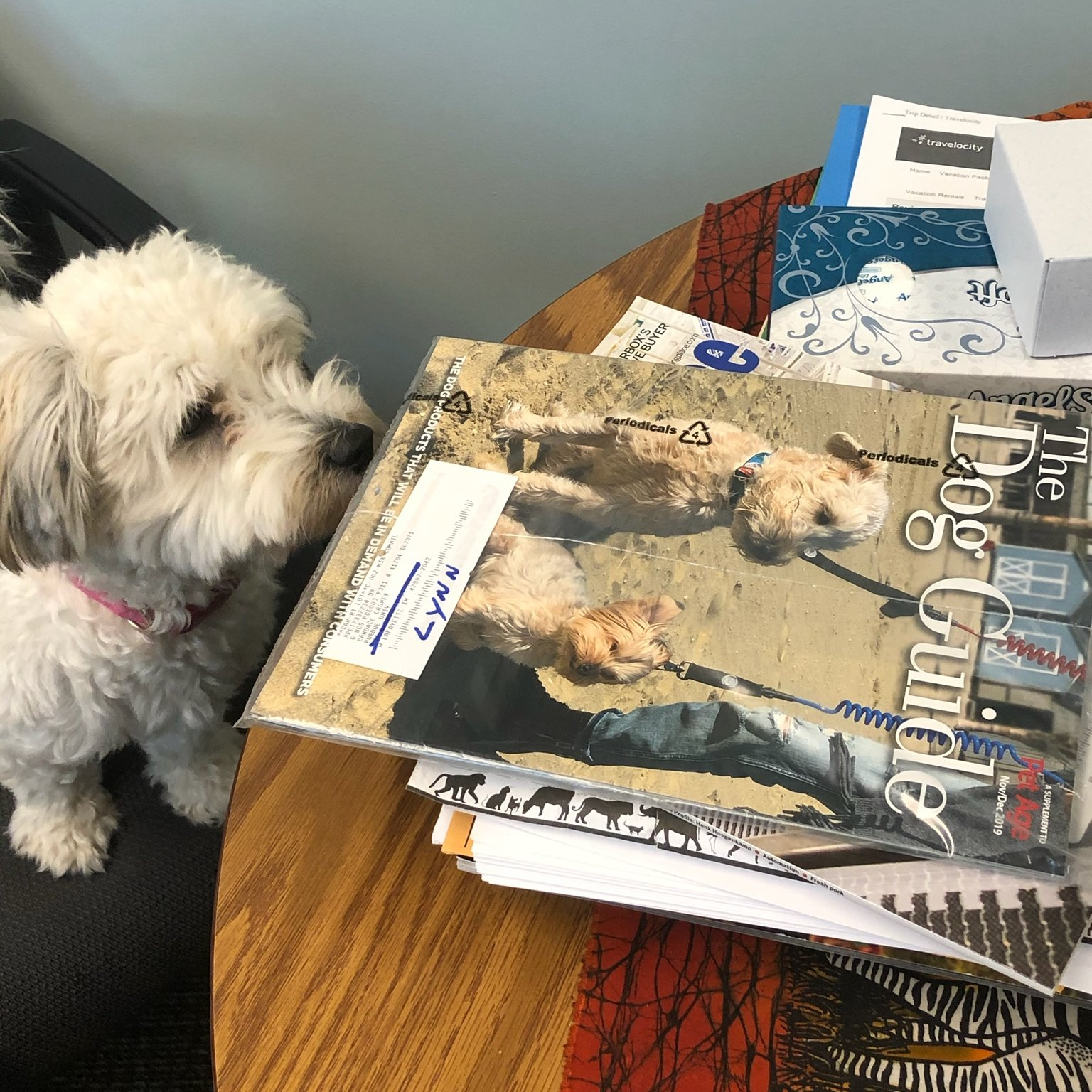 Croney's dog looking at a magazine