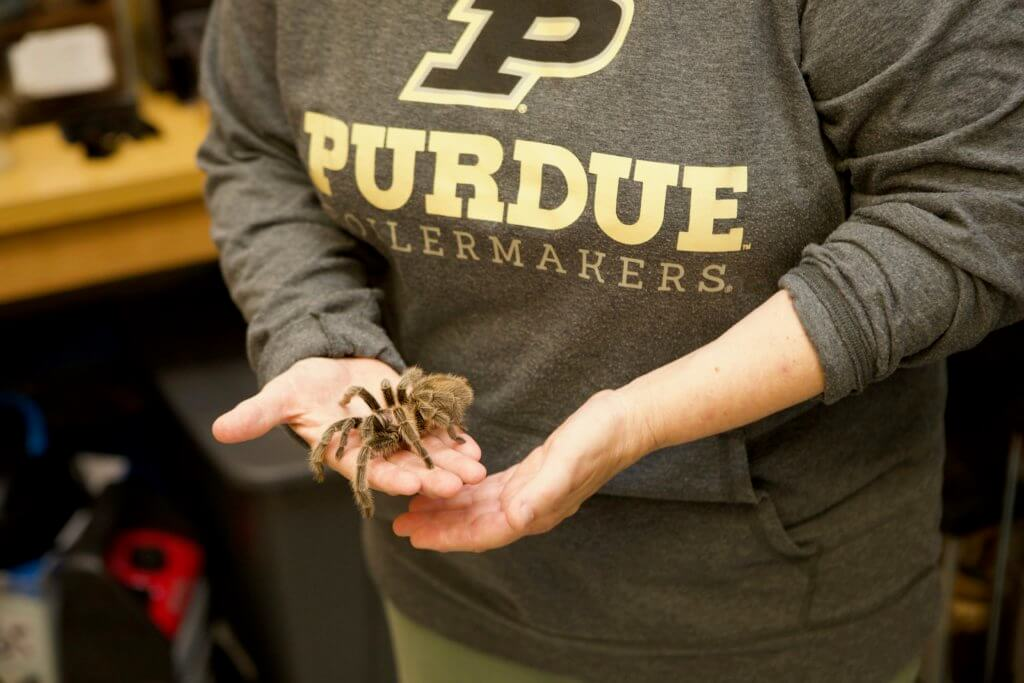 Gwen Pearson shows off a tarantula at the Insect Petting Zoo.