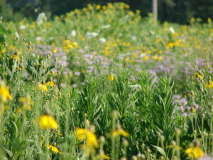 mixed planting for soil conservation