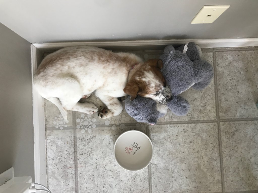 Joanna Rogowski's sleeping dog
