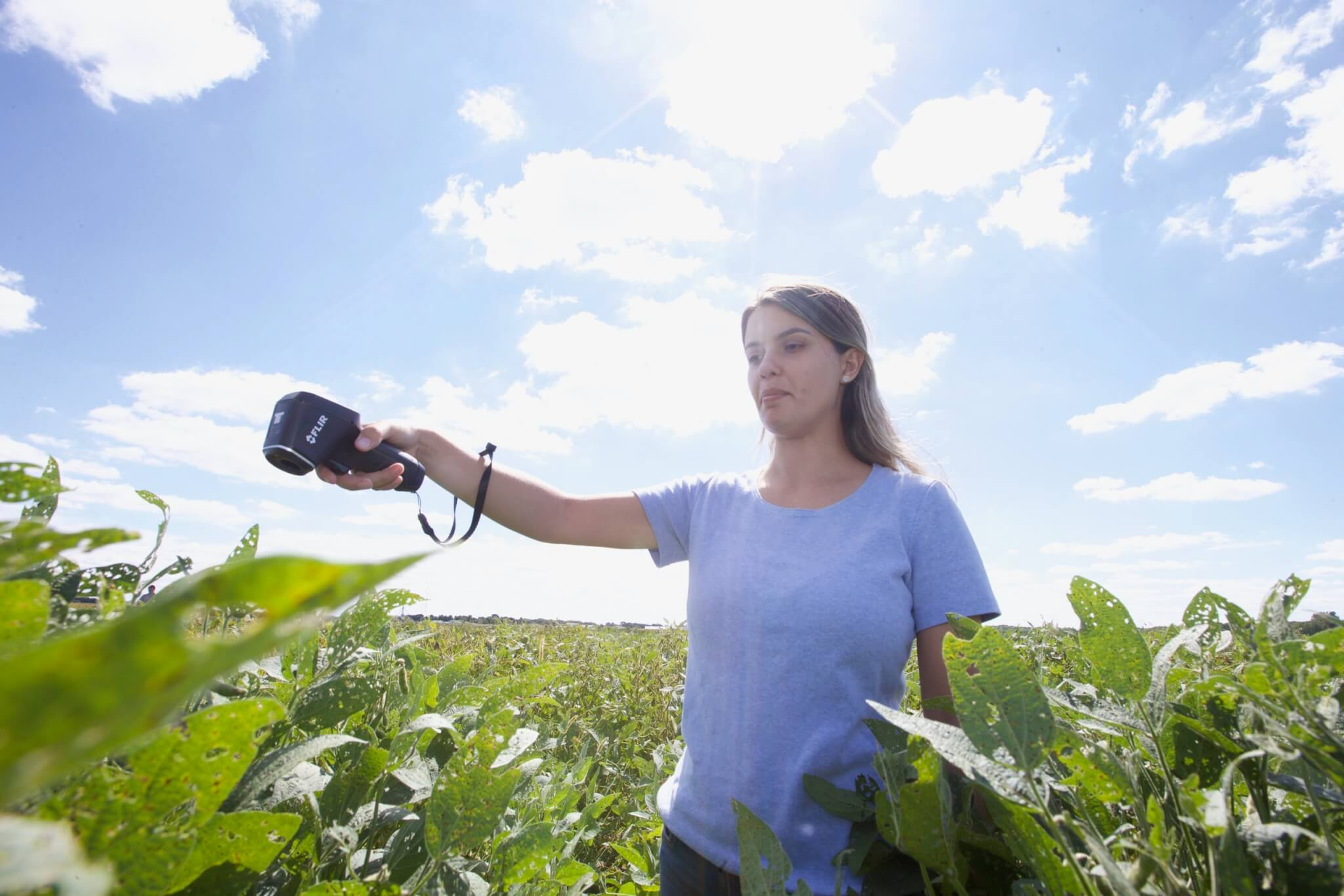 Katy Rainey conducts field work at the Agronomy Center for Research and Education Center (ACRE).